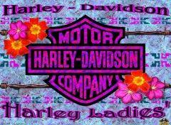 Fonds d'écran Motos Harley Ladies'