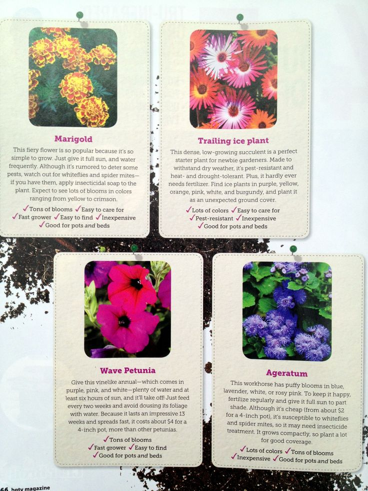 More #EasyCare flowers to plant from @HGTV magazine.