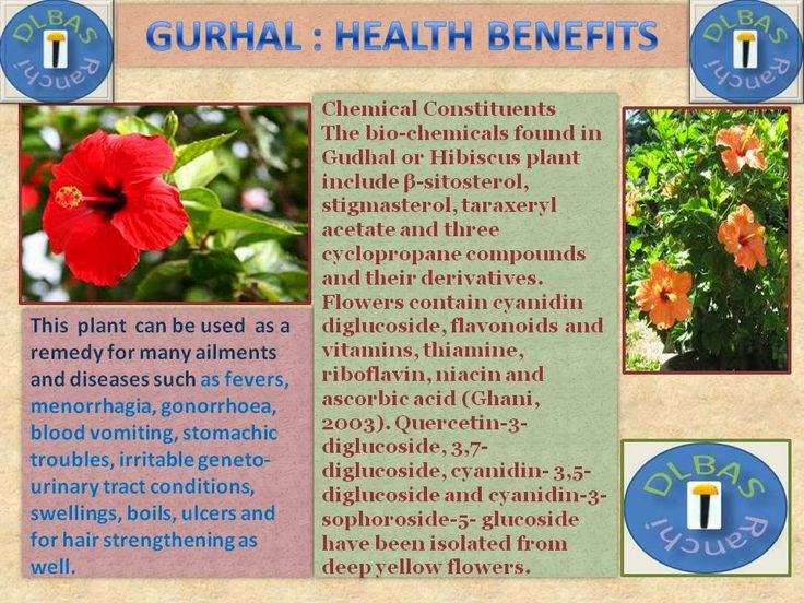 Benefits of gudhal flower