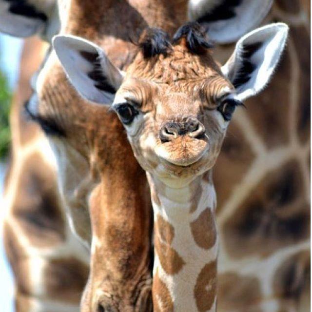 www.forlegs.com.br! #segunda#forlegs#legging#boasemana#site#ecommerce#girafe#cos#tradicional#style#fahion