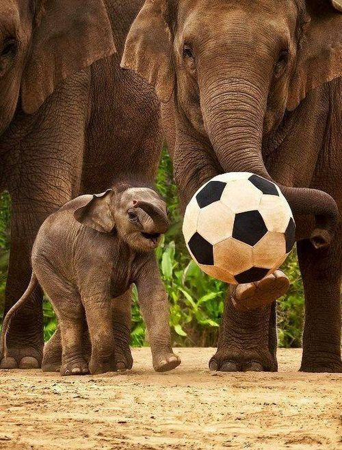 Casual #soccer game. #animals #elephants