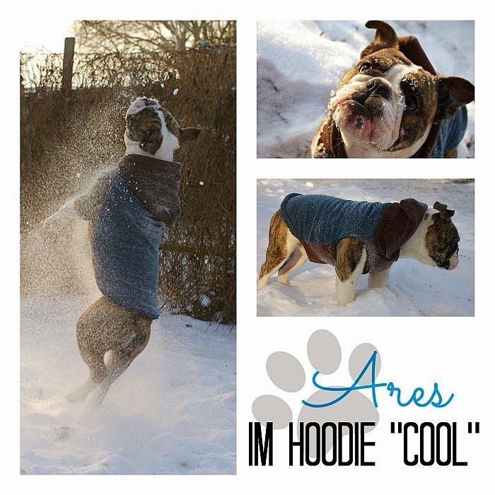 Do-It-Yourself-Hoodie für Hunde. Soo schön <3