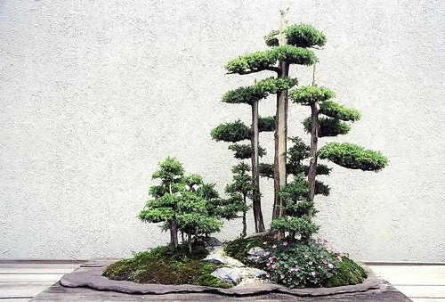 probably the most intense group/slab piece i have seen. mind = blown. #bonsai
