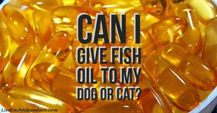 If you are like us and take fish oil capsules on a regular basis, you may have wondered if your pets can or should take them also (obviously we are not talking here about your goldfish!).