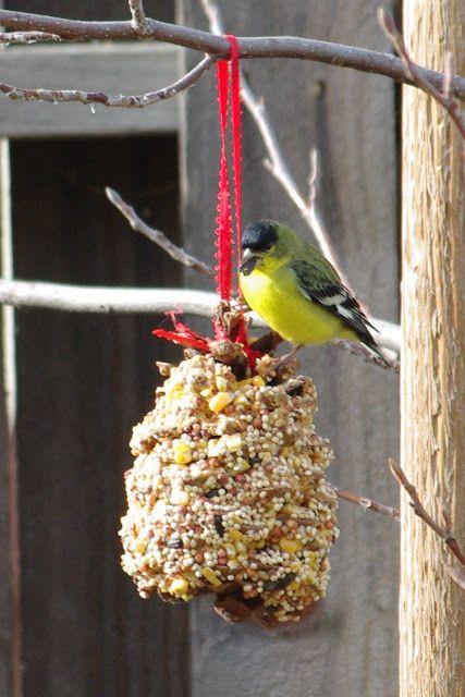 best 25  pinecone bird feeders ideas on pinterest