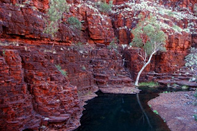 Karijini NP  Knox Gorge. This is not the part of the gorge that the normal tourist would venture into.  My friend Bob and I went this way specifically to photograph this standout tree