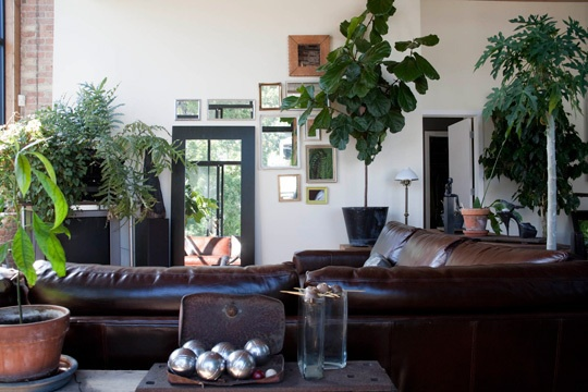 Best 25+ Large Indoor Plants Ideas On Pinterest