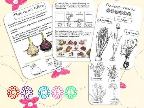 PLANTONS DES BULBES   la classe de corinne   Bloglovin