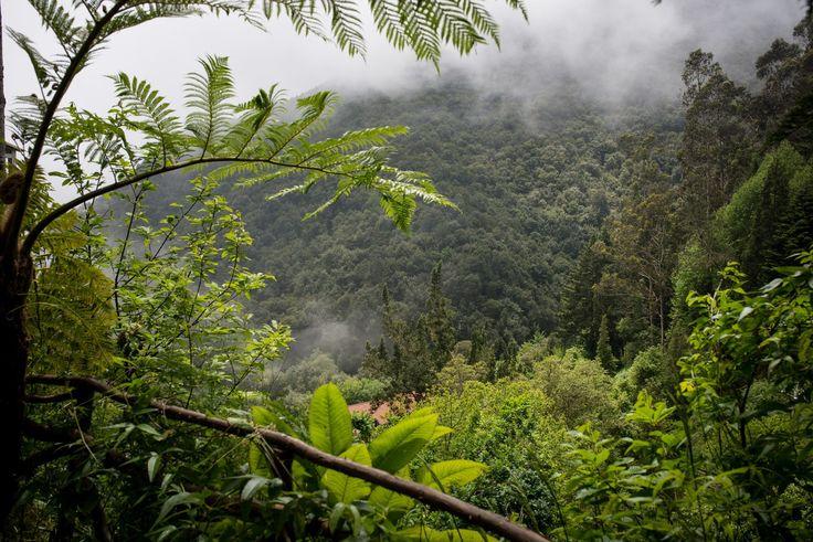 Au coeur de la Forêt Laurifère de Madère - via Miles & Love 16.06.2015 | Petite parenthèse un peu spéciale concernant notre voyage à Madère, on avait envie cette fois-ci de vous parler d'une des particularités de l'ile, ses forêts subtropicales humides. Si belles et particulières, puisqu'on ne les trouve que dans ce coin du monde, qu'elles sont classées au patrimoine mondial de l'Unesco. Et en vrai, c'est impressionnant. #madeira #portugal #voyage #tips
