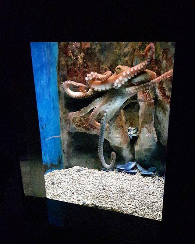 #cretaquarium #cretaquarium10years @Cretaquarium  @CreteRegion #myhersonissos #Greeksummer @VisitGreecegr #DiscoverGRcom #lovingreece  #menoumellada #cretaquarium  @heraklion_info_point  #aquarium #sea #marine #underwater #marinelife #research #fish  #science #mygreeksummer #explore #discovery #kids #fun #crete #myhersonissos #wildlife #photography #biology #geology #visit #nature #shark #medousa  #shark #share  #marine