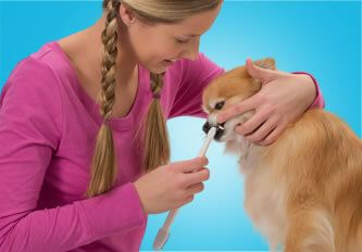 Online Dogs Dental Care Products – Cannabis For Your Dog Dogs have 28 puppy teeth and 42 permanent teeth. Dog dental problems can manifest through bad breath, abscesses and the refusal to eat, so use best dogs dental care products from Innovet Pet Online Pet Store with 30 days guarantee. Call now: 888-269-3154