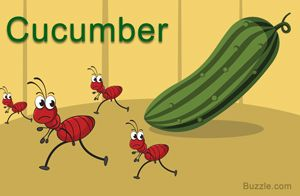 Home Remedies to Get Rid of Ants- Cucumber