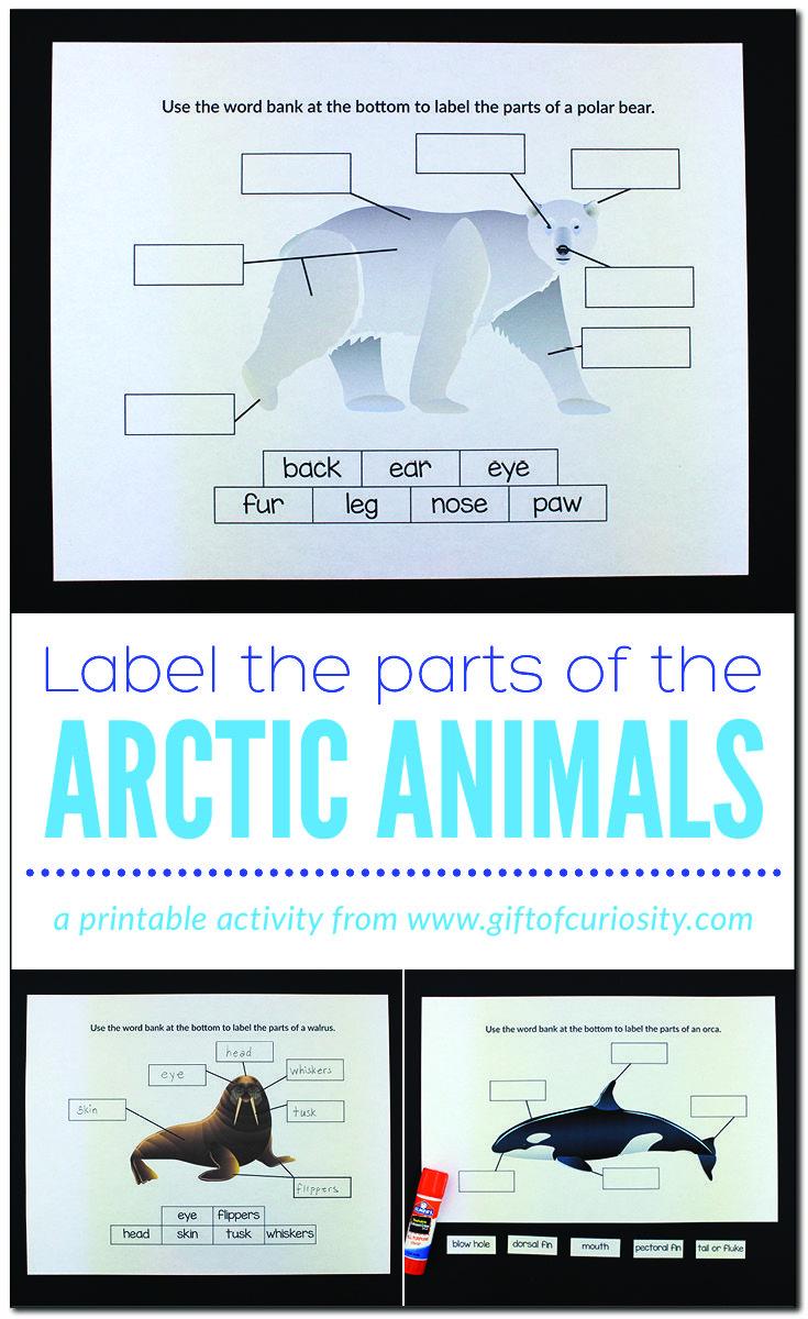 Pin On Unit Ideas Polar Animals Lands [ 1200 x 735 Pixel ]