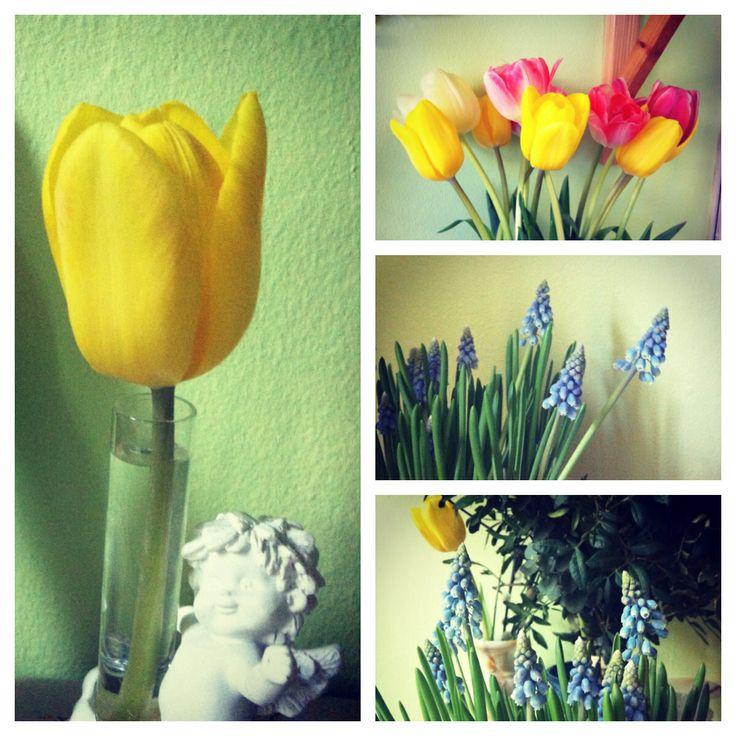 Fikk blomster (tulipaner og muscari) fra Finn Schjøll :)