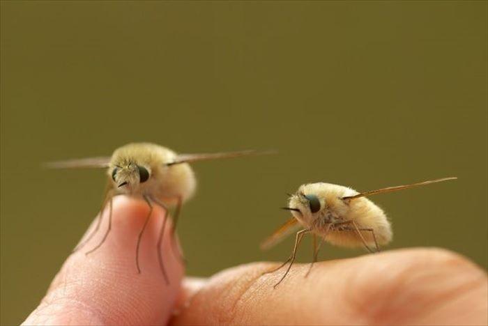 キモイ可愛い虫17 奇妙な生き物 動物 希少動物
