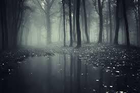 Image result for dark forest
