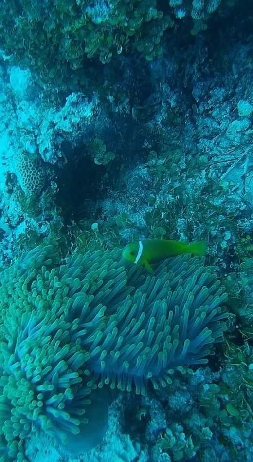 The habitats of Maldives are nothing compared to any place