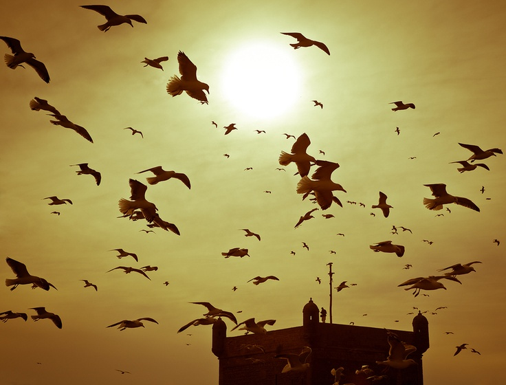 The Birds - Svein Nordrum. Location: Essaouira, Morocco.