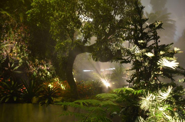 Imitiate of rainforest