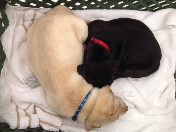 franklin and betsey at their first adoption meet and greet