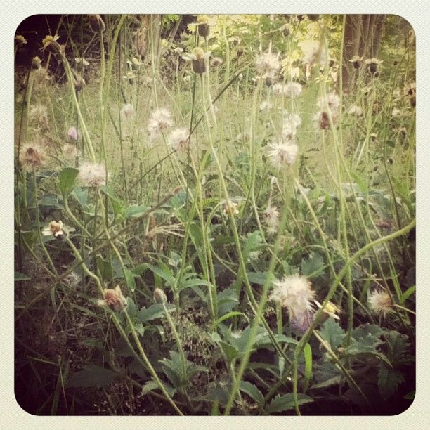 Wild grass and weeds in our backyards