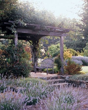 """Arbor - """"Madame Alfred Carriere"""" roses grow on the arbor near the lavender garden."""