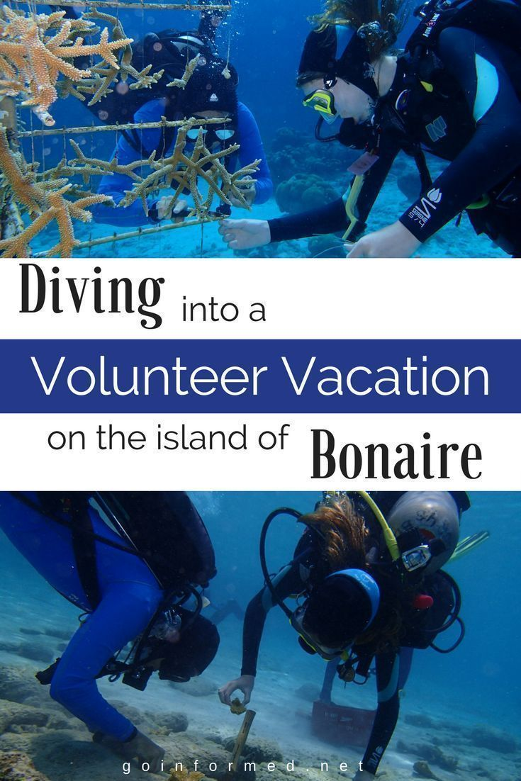 Diving Into A Volunteer Vacation On The Island Of Bonaire Best Scuba Diving Diving Diving School