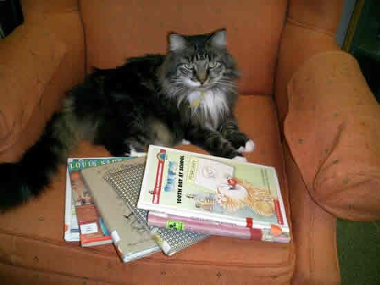 Emma the Lyme Library Cat