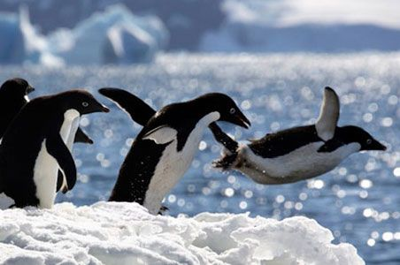 Expedition Cruise to Antarctia to see a real march of the penguins!  #monogramsvacation