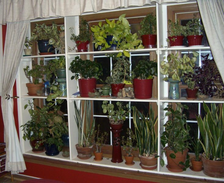 Window plant shelves