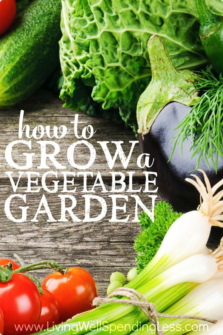 how to grow a garden for beginners