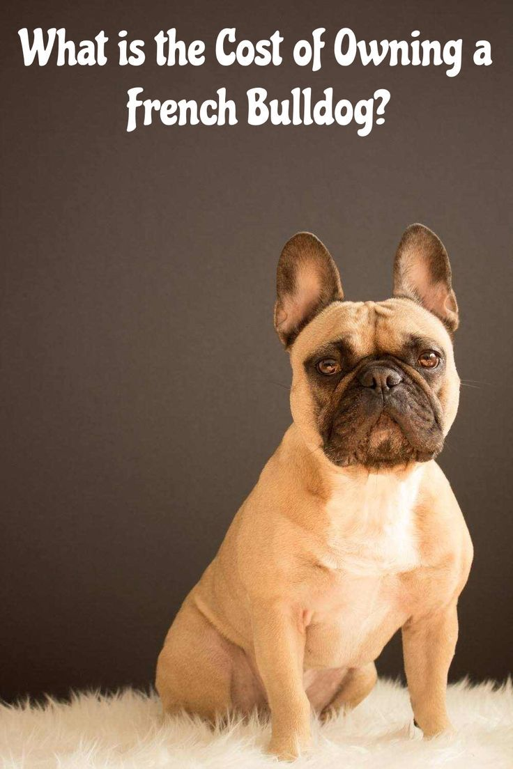 Cost Of Owning A French Bulldog In 2020 Bulldog Puppies French Bulldog Fawn French Bulldog
