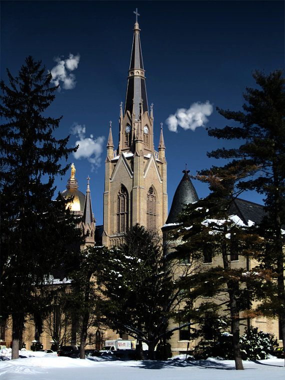 Notre Dame Basilica Winter Spire Pine Trees Photography Art Print Multiple Sizes