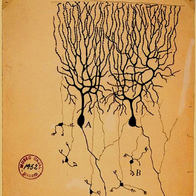 how to grow new neurons