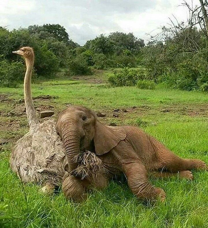 Love comes in many ways. It's nap time for two friends.