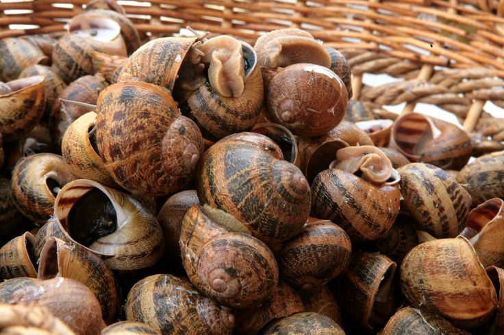Helix Aspersa Maxima - We ship throughout Europe #snails #snail #escargot #caracoles #chef #restaurant #italianfood #snailfarmer
