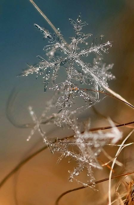 Beautiful photos of real snowflakes captured using macro lens