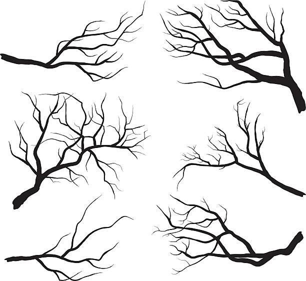 Branch Silhouettes vector art illustration