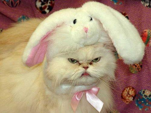 Persian cats ugly
