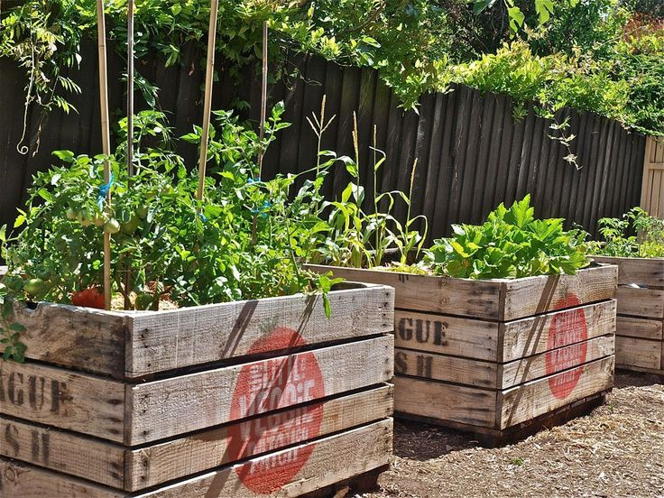 The little veggie patch vegetable gardens to your door for Veggie patch ideas
