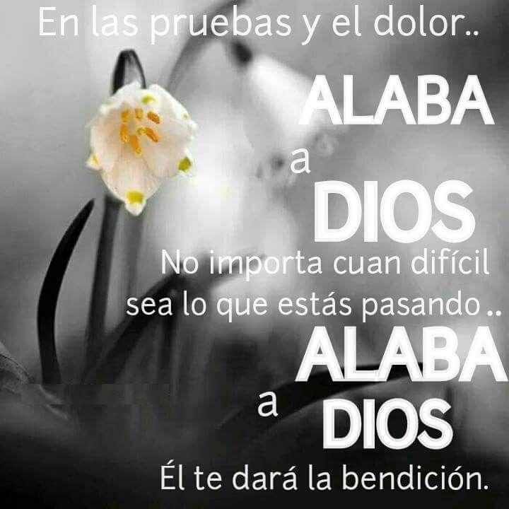 En las pruebas y el dolor… Alaba a Dios no importa cuan difícil sea lo que estás pasando… Alaba a Dios Él te dará la bendición.
