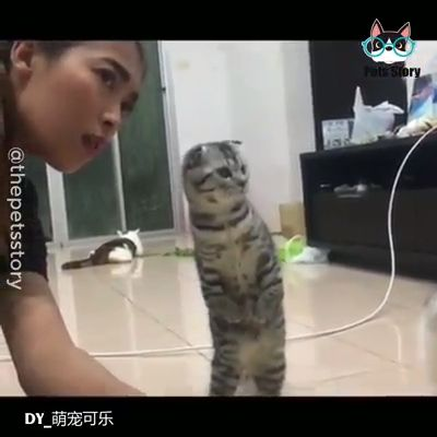 Funny Actions Of Cats!