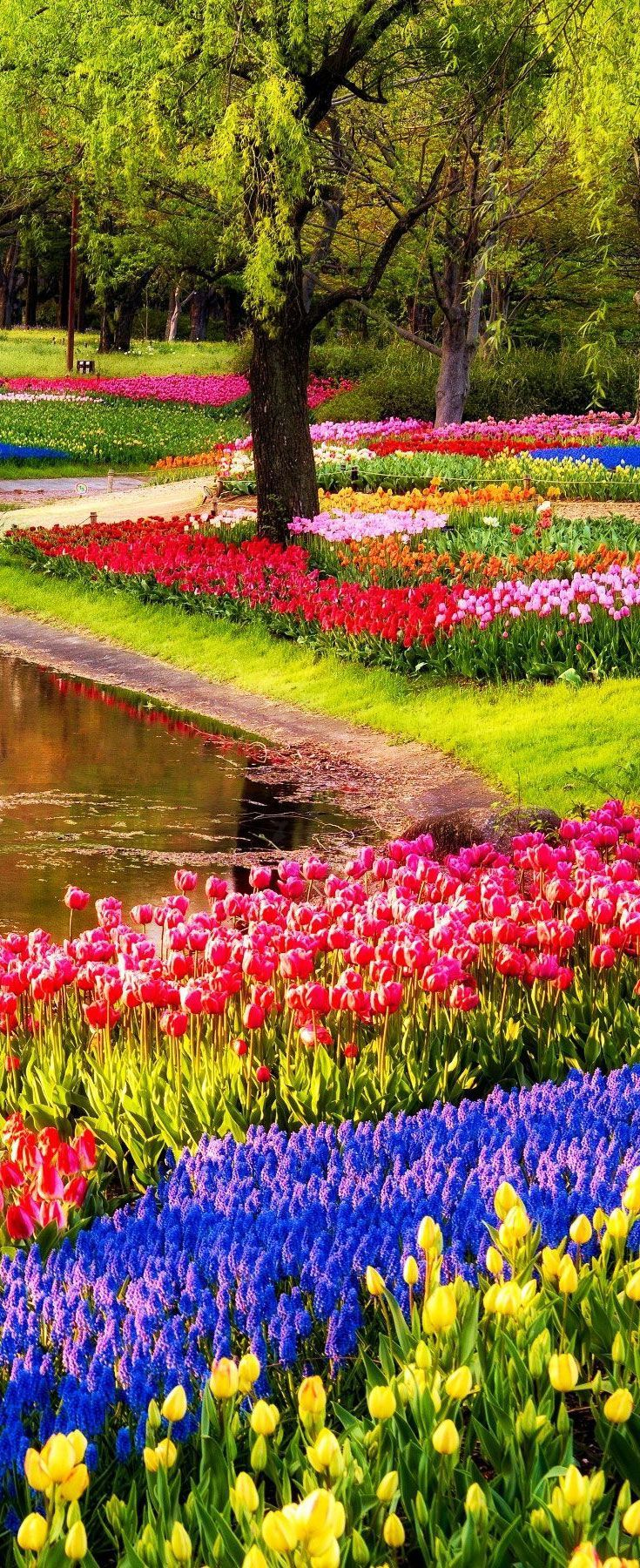 Cool The Keukenhof Garden also known as the Garden of Europe is one of the world us biggest flower gardens