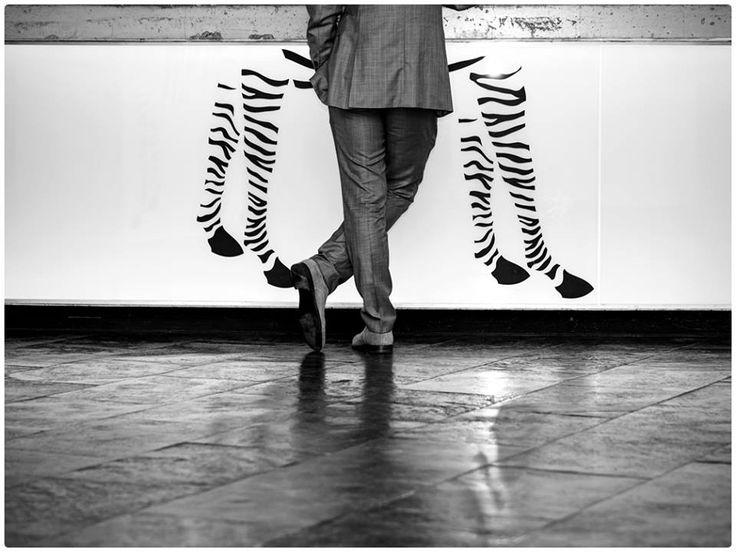 Black&White photo #design #zebra #blackwhite #black&white