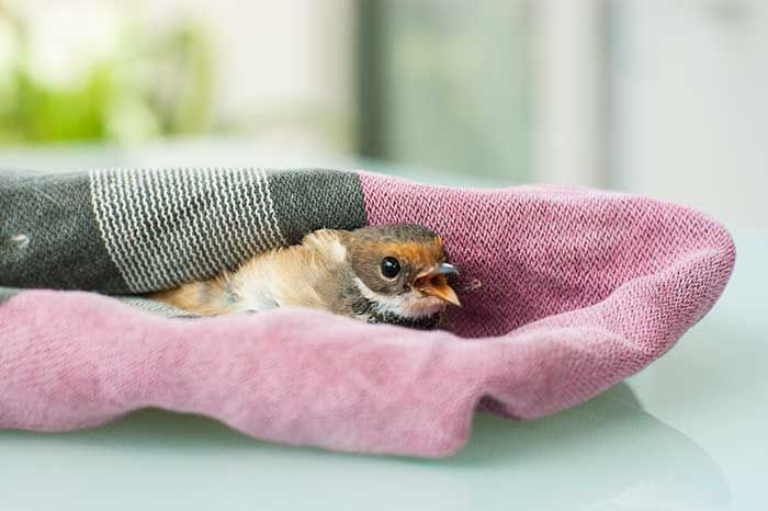 Little dicky bird