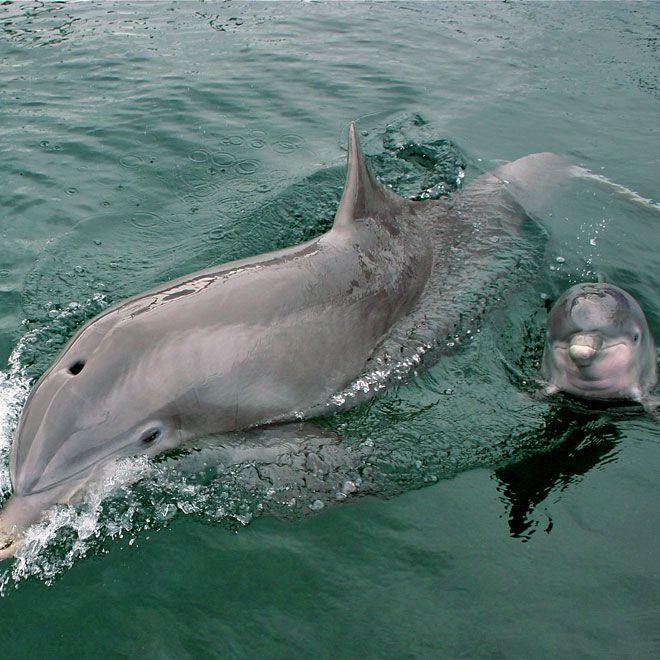 Duisburg Delfin Baby Nach Nur Einer Woche Gestorben Delfines Animales Bonitos Animales