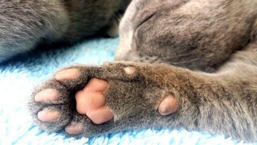 Toe beans