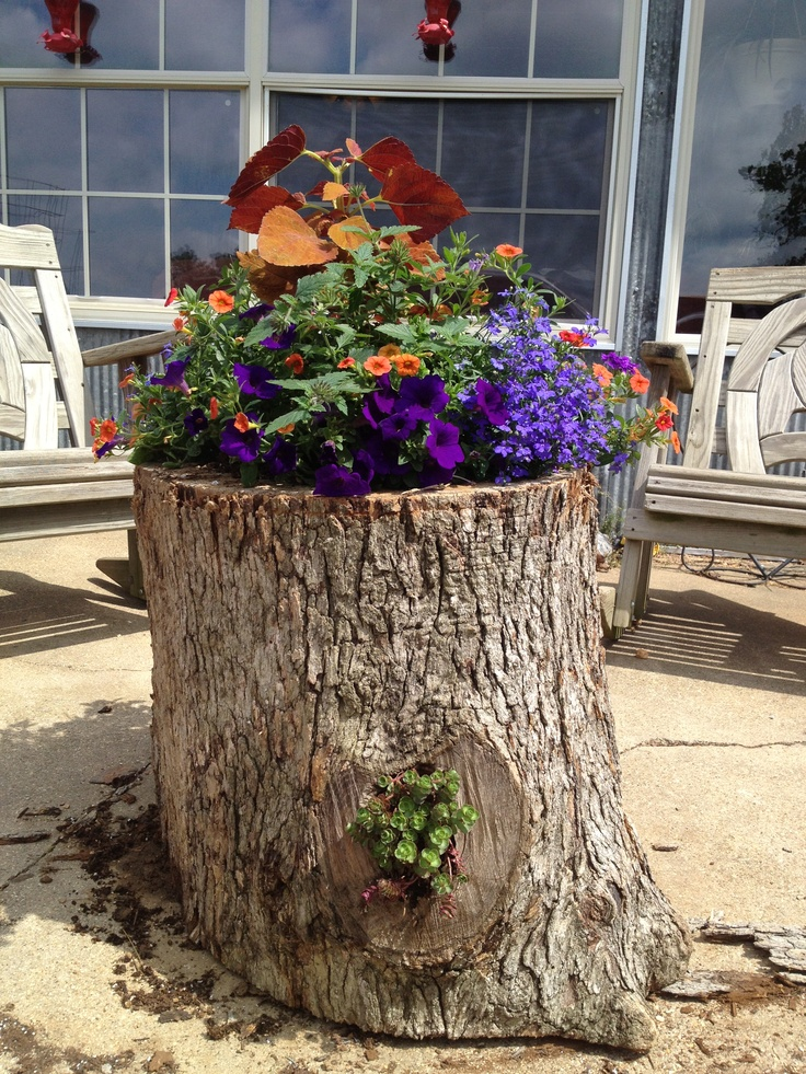 Planter made from a hollow log tree branch ideas for Arboles con flores para jardin