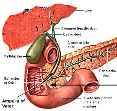 Sphincter of Oddi Dysfunction | Causes, Symptoms, Diagnosis And Treatment