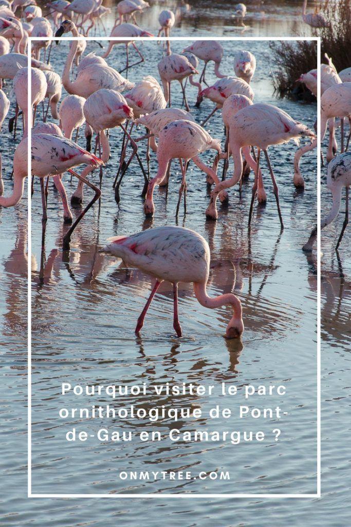 Pourquoi visiter le parc ornithologique de Pont-de-Gau en Camargue?